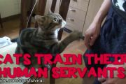 Cats training humans - cute..